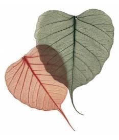 8 foglie di Salice Verde Scuro