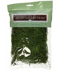 Muschio Spagnolo The Moss Collection