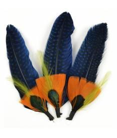 Piume decorative, Blue & Sienna